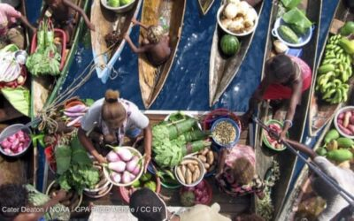 Opinion: Ensuring UN Food Systems Summit makes an impact